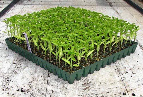 seedling-trays-01