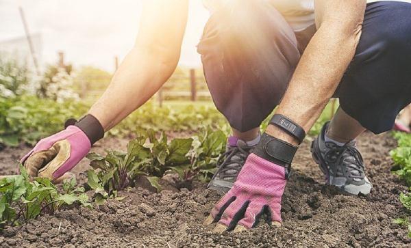 مشخصات دستکش باغبانی