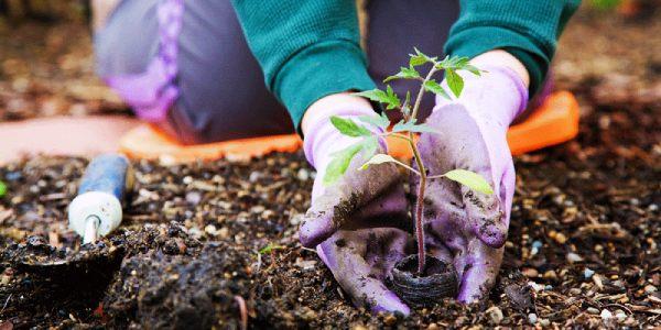 کاربرد دستکش باغبانی