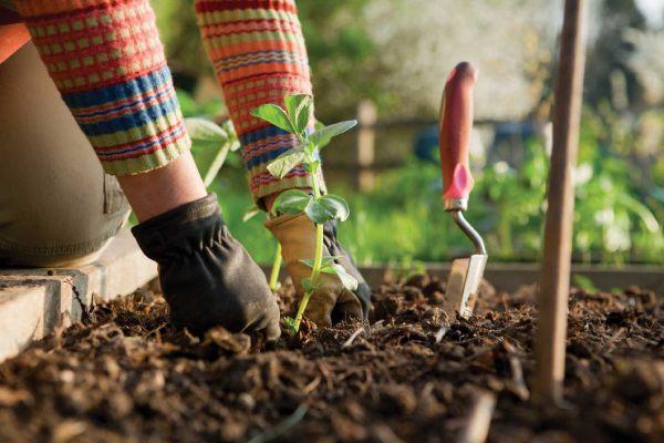 خرید اینترنتی دستکش باغبانی از دمبرگ