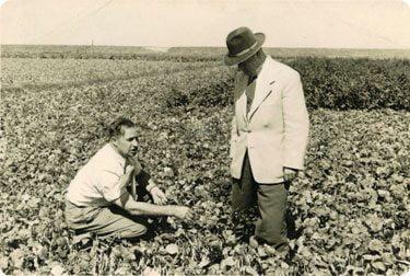 مزرعه ی تولید سبزیجات