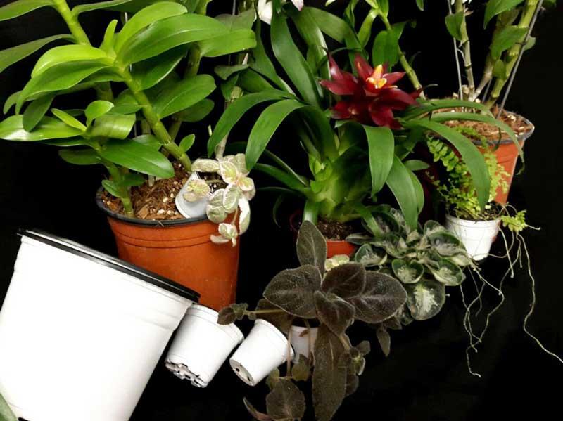 انواع تاپ گلدان