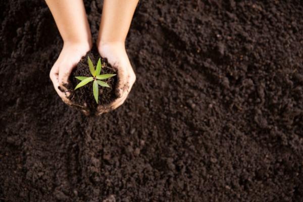 ترکیبات و مواد تشکیل دهنده خاک پیت ماس گرامافلور