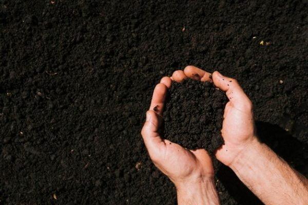 دستورالعمل استفاده از خاک پیت ماس گرامافلور