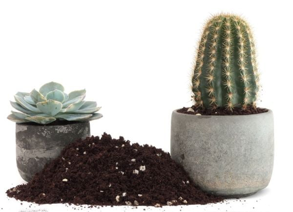 خاک کاکتوس گرامافلور