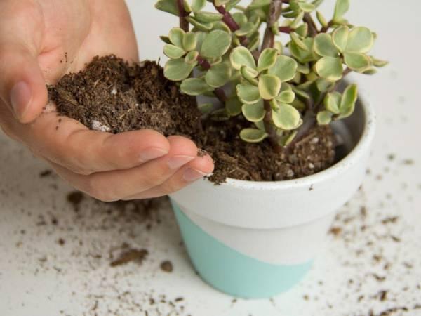 ترکیبات خاک کاکتوس گرامافلور