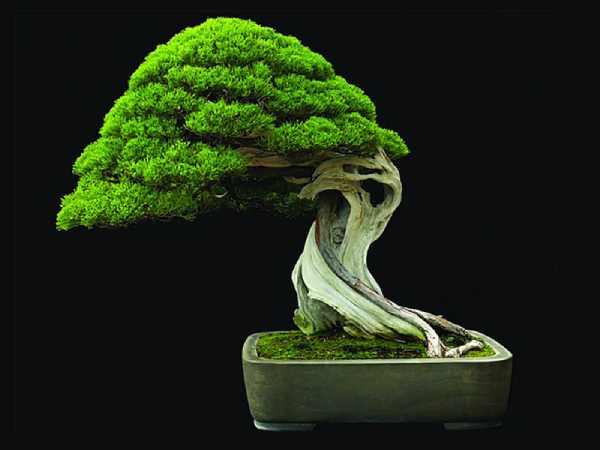 ترکیبات و مواد تشکیل دهنده خاک بونسای گرامافلور