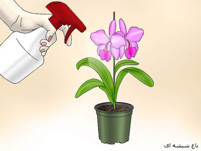 670px-care-for-orchids-step-4-version-4