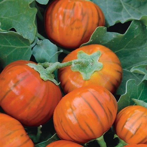 بادنجان ترکی یا نارنجی
