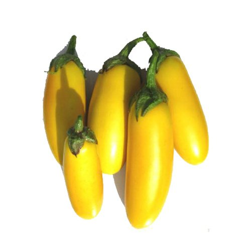 بادنجان قلمی زرد