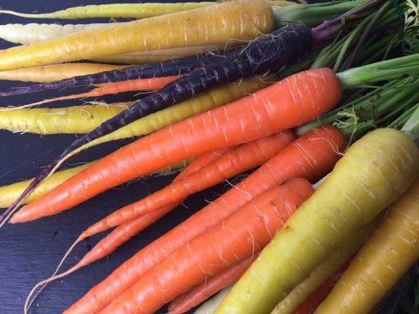 بذر هویج رنگی
