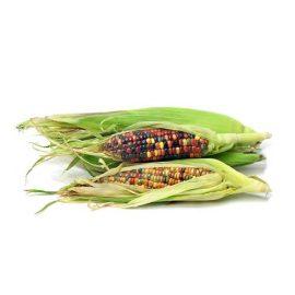 بذر ذرت رنگین کمان