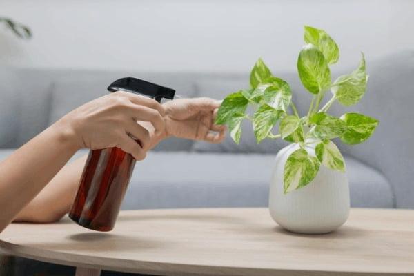 خرید اینترنتی کود گیاهان آپارتمانی گرین گروت