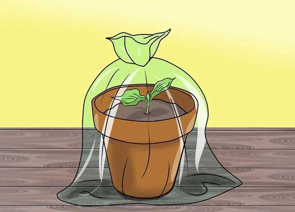 مشما روی گلدان حاوی بذر