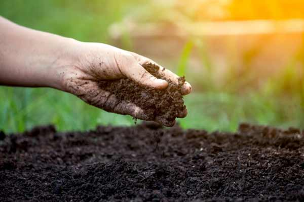 استفاده از خاک برگ بهکام