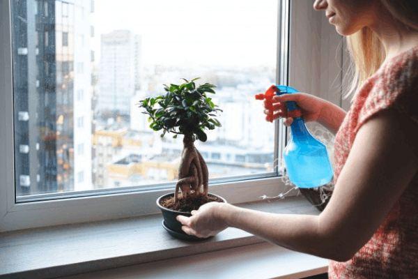 میزان و نحوه مصرف کود مخصوص بونسای گرین