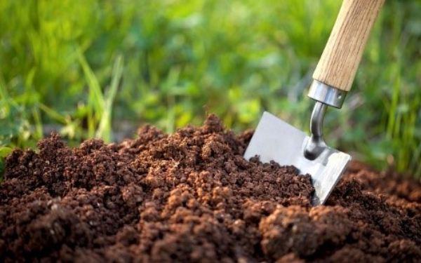 معرفی خاک آماده کاشت بهکام