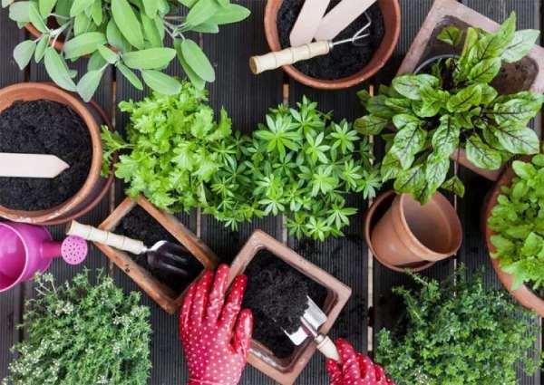 فواید و تاثیرات خاک آماده کاشت بهکام