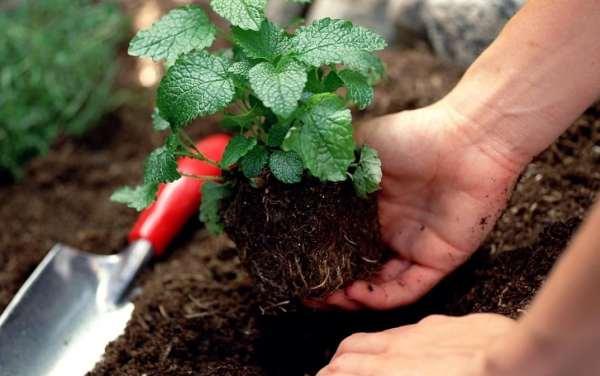 موارد استفاده از خاک آماده کاشت بهکام