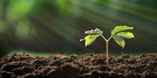 خرید انواع خاک باغبانی