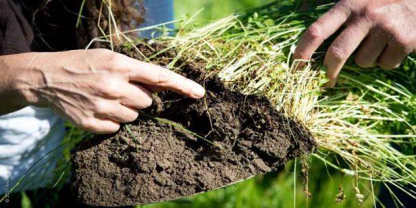 فروش خاک باغبانی