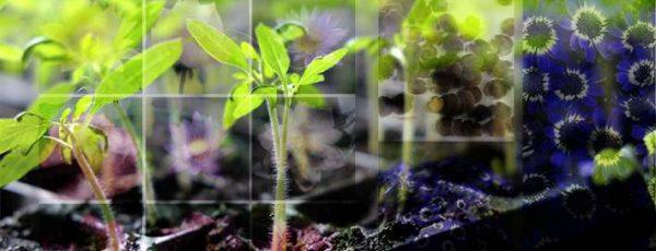 بذر گیاهان زینتی