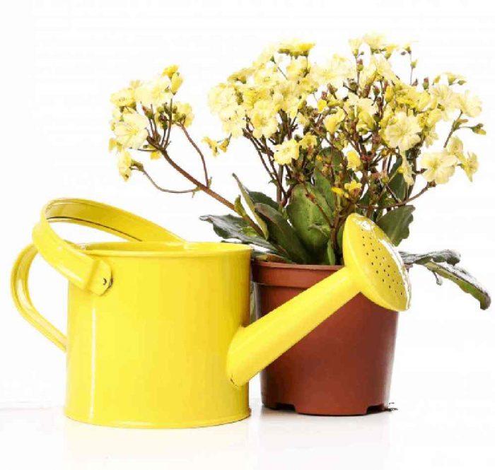 روش های صحیح آبیاری گل و گیاهان آپارتمانی