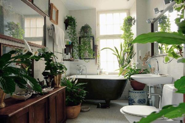 تزیین سرویس بهداشتی با گل و گیاه