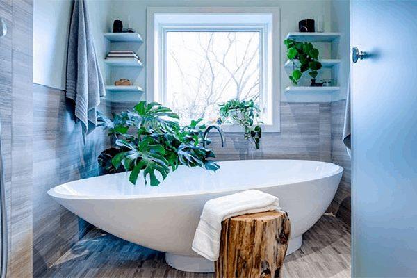 گیاهان مناسب سرویس بهداشتی و حمام کم نور