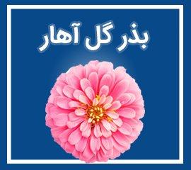 بذر گل آهار