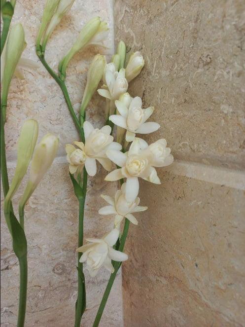 عطر گل مریم
