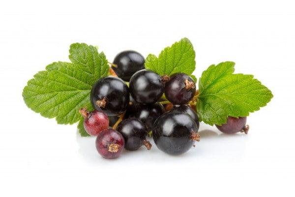 بذر ردکارنت انگور فرنگی مشکی