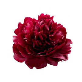 پیاز گل صدتومانی