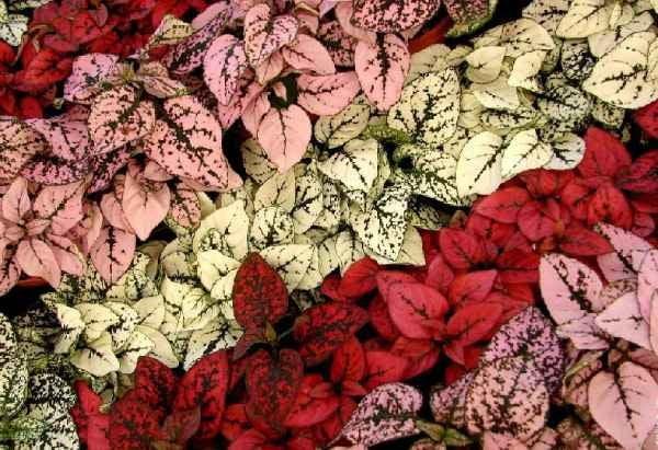 مزایای خرید بذر انواع گلسنگ از سایت دمبرگ