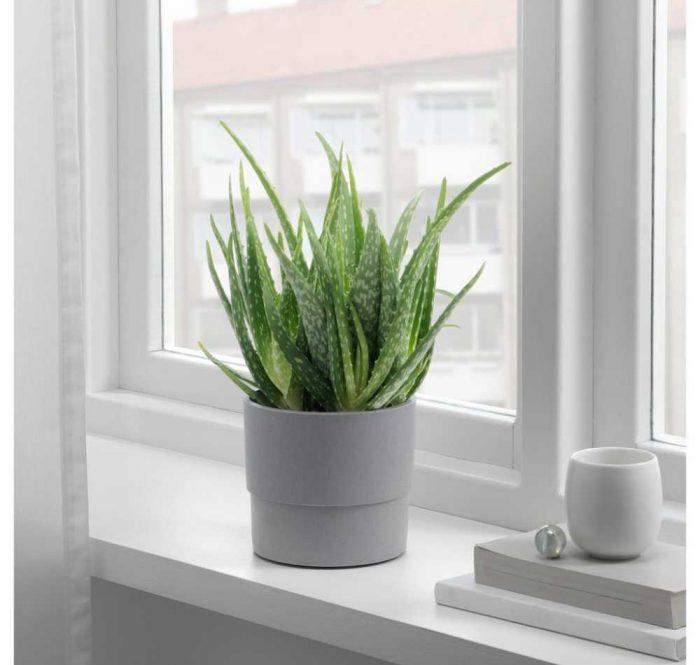 گل و گیاهان مقاوم به گرما و کم آبی (مناسب فصل تابستان)