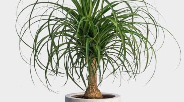 گیاهان مقاوم به کم آبی