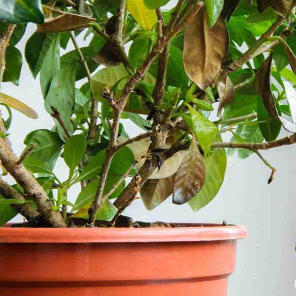 بیماری گیاهان آپارتمانی