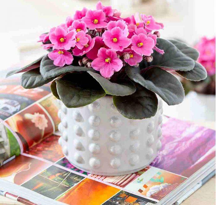 گیاهان آپارتمانی همیشه گلدار