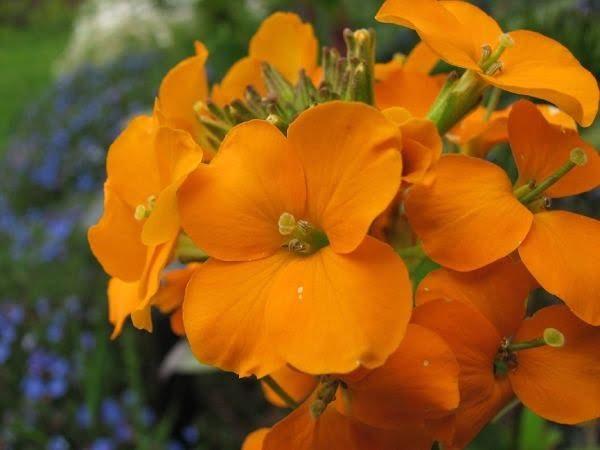 خرید بذر گل های شب بو زینتی