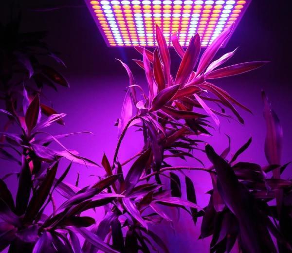 تفاوت لامپ رشد گیاه با لامپ های معمولی