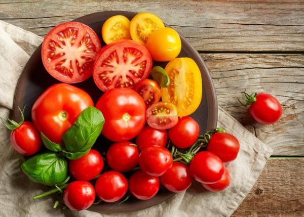 قیمت بذر گوجه فرنگی