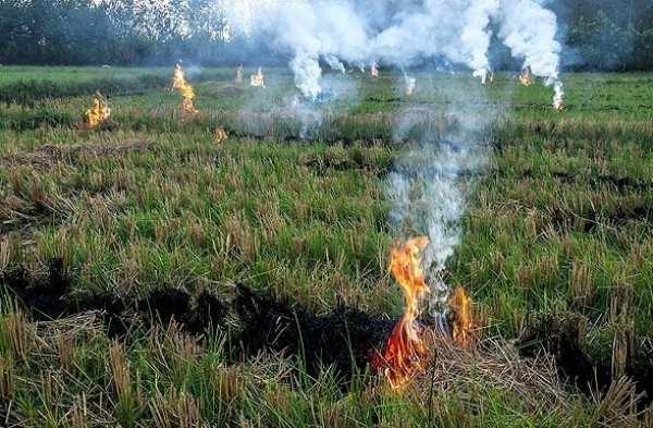 سوزاندن علف های هرز