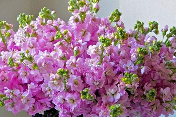 مزایای خرید بذر گل های شب بو از دمبرگ