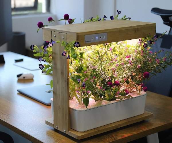 طول موج نور مناسب برای رشد گیاه