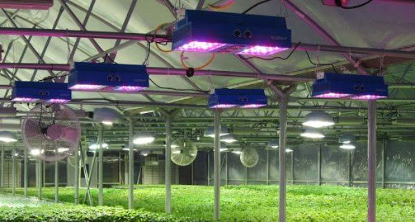 نحوه نورپردازی و تنظیم نور LED برای رشد گیاهان