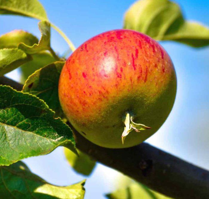بهترین زمان و روش سمپاشی درختان میوه و باغات