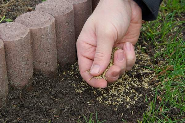 آموزش کاشت بذر چمن
