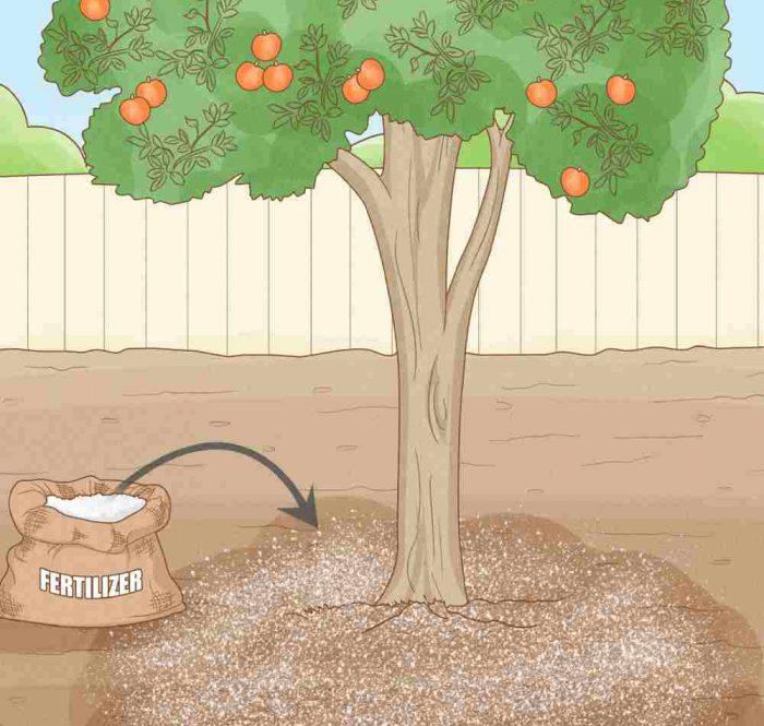 کوددهی به درختان میوه
