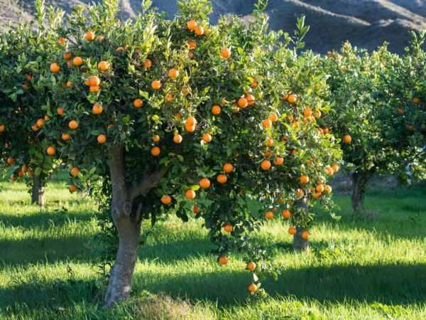آموزش کوددهی به درختان میوه