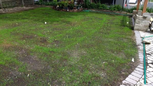 روش کاشت بذر چمن در باغچه